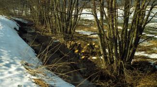 Ufergehölzpflege